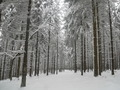 Forrest covered in Snow - PhotoDune Item for Sale