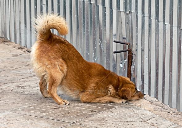 PhotoDune The dog looks up under a fence 4047986