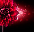 Dahlia Flower Design over Black Background - PhotoDune Item for Sale