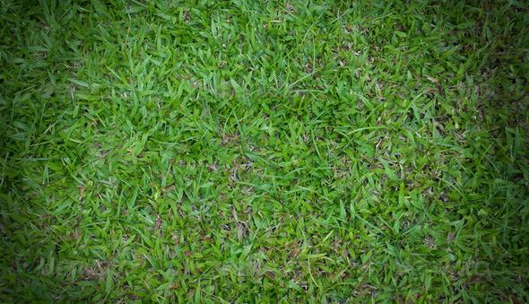 PhotoDune grass field 4048058