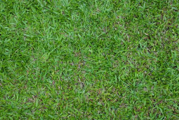 PhotoDune grass field 4048062