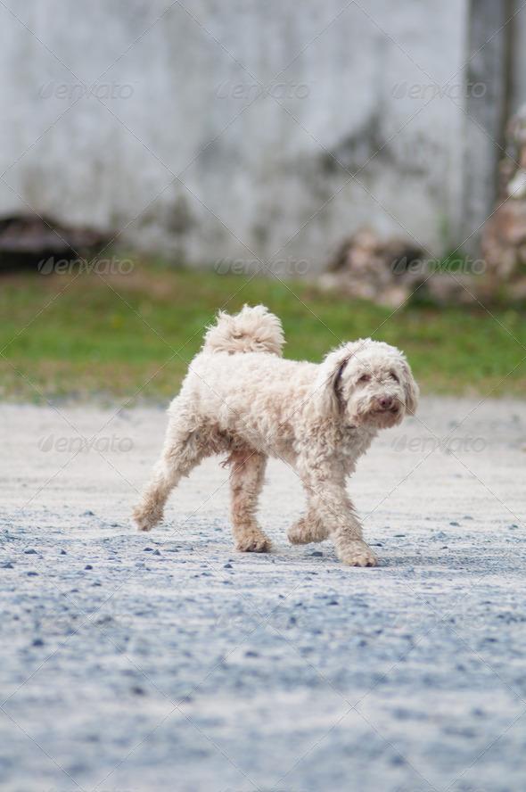 PhotoDune terrier 4048090