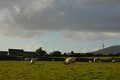 Field and grazing sheep, Ireland - PhotoDune Item for Sale