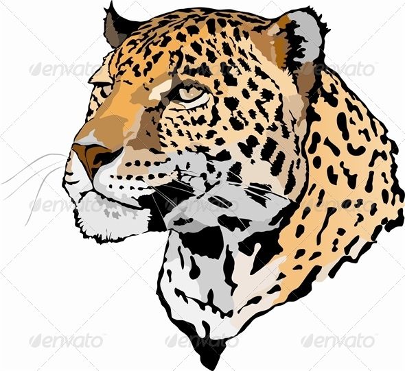 GraphicRiver Head of Leopard 4052661