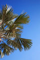 An image of nice palm trees in the blue sunny sky - PhotoDune Item for Sale