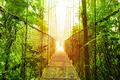 Arenal Hanging Bridges park of Costa Rica - PhotoDune Item for Sale