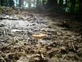 One Lonely Mushroom - PhotoDune Item for Sale