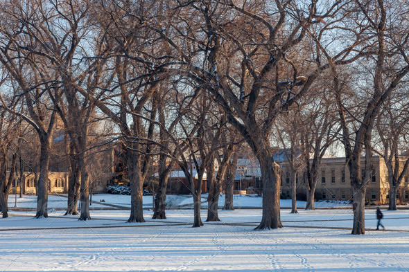 alley of old elm trees at university campus - Stock Photo - Images