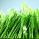 Grass Under Rain 2 - VideoHive Item for Sale