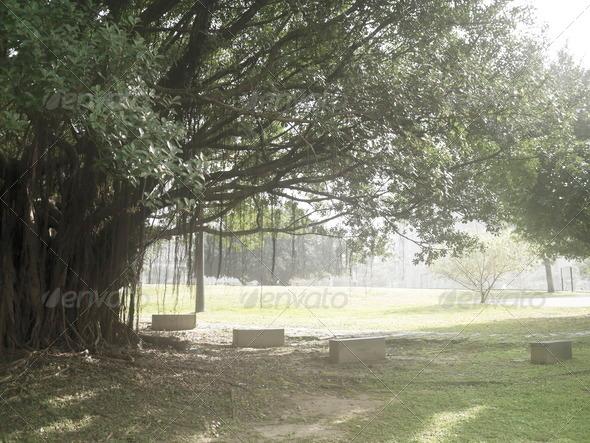 PhotoDune old trees 4071493