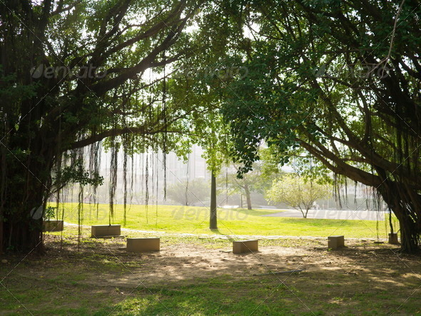 PhotoDune old trees 4071497