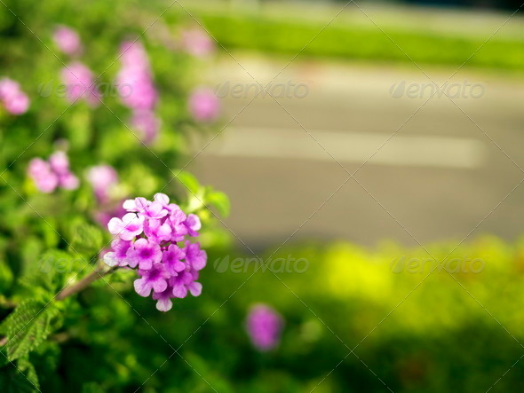 PhotoDune green park 4071499