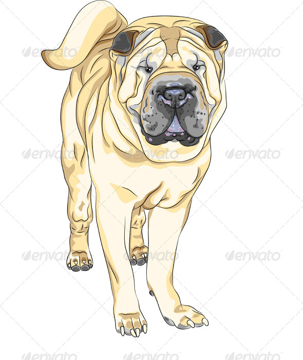 Vector Dog Breed Chinese Shar Pei - Animals Characters