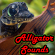 Alligator%20sound%2080x80