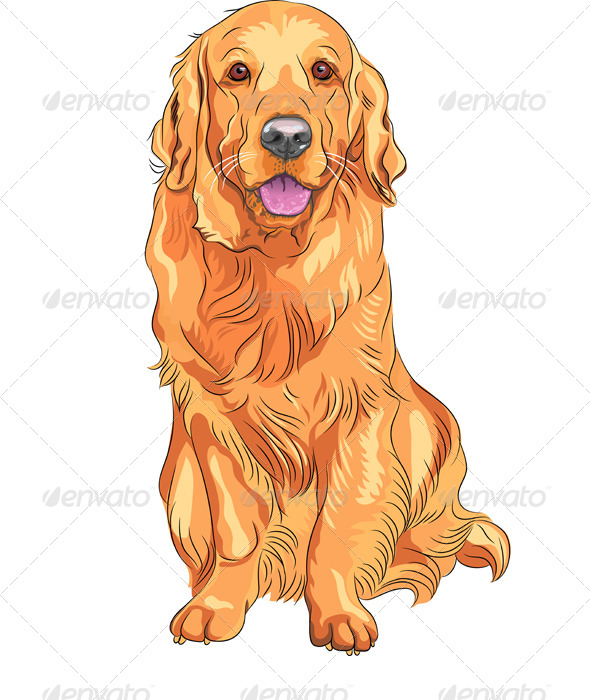Vector Dog Breed Golden Retriever Sitting - Animals Characters