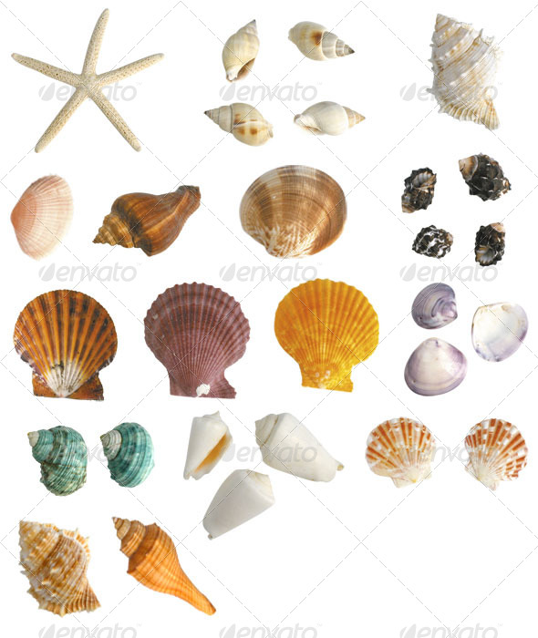 GraphicRiver Sea Shells Collection 4080005
