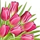 Pink tulip with green leaves. Gift frame. - GraphicRiver Item for Sale