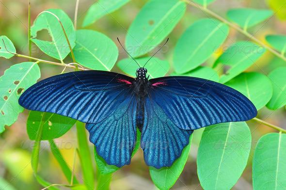 PhotoDune Black butterfly 4082150