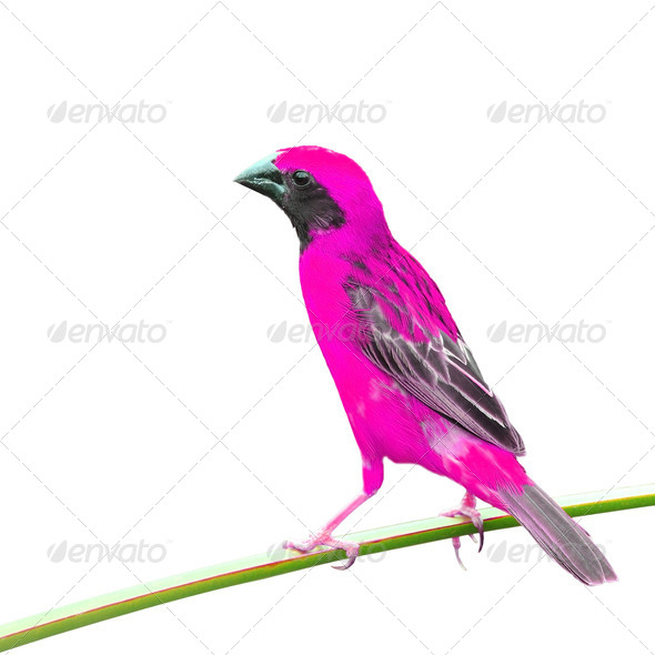 PhotoDune Pink Bird 4082161