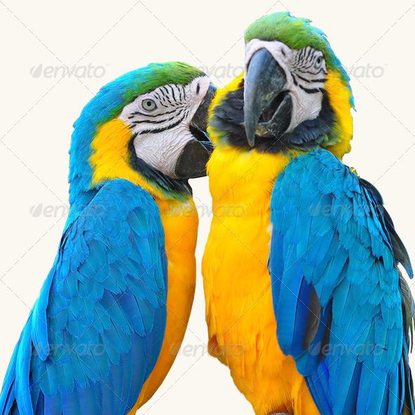PhotoDune macaw love bird 4082182