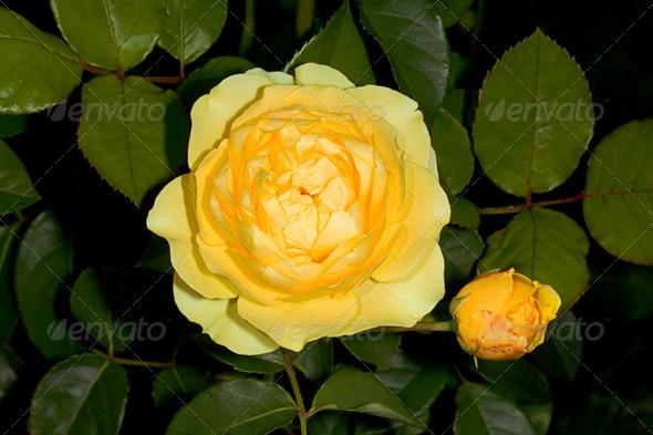 PhotoDune Yellow flower 4082442