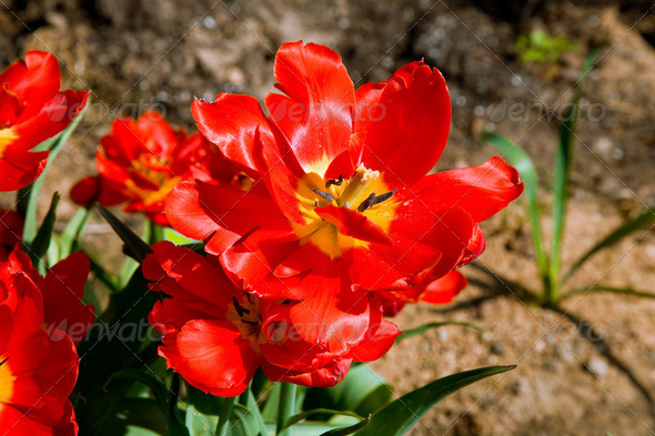 PhotoDune Red flower 4082473