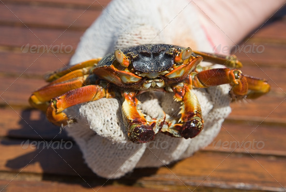PhotoDune The crab in a hand 4082489