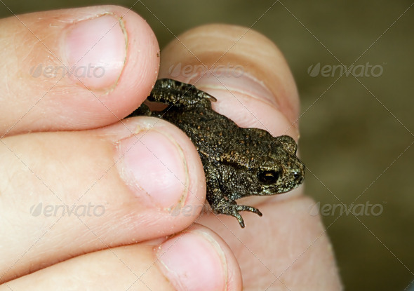 PhotoDune Small frog in a hand of the child 4082503