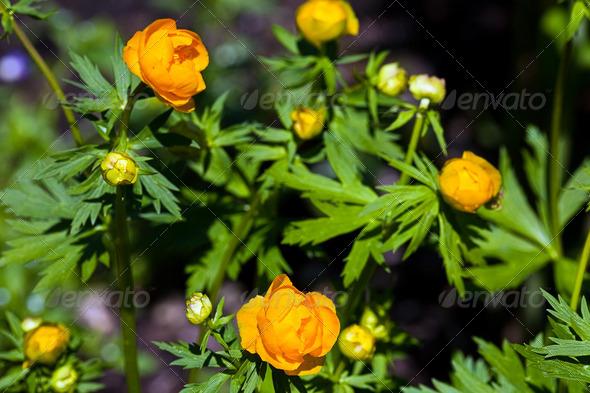 PhotoDune Yellow flower 4082522