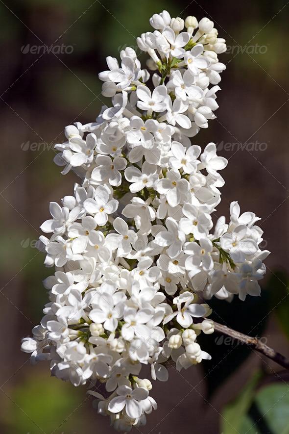 PhotoDune White flower 4082537