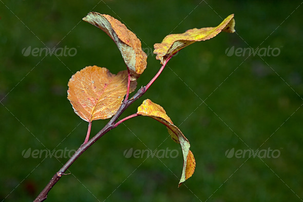 PhotoDune Yellow leaves Autumn 4082542
