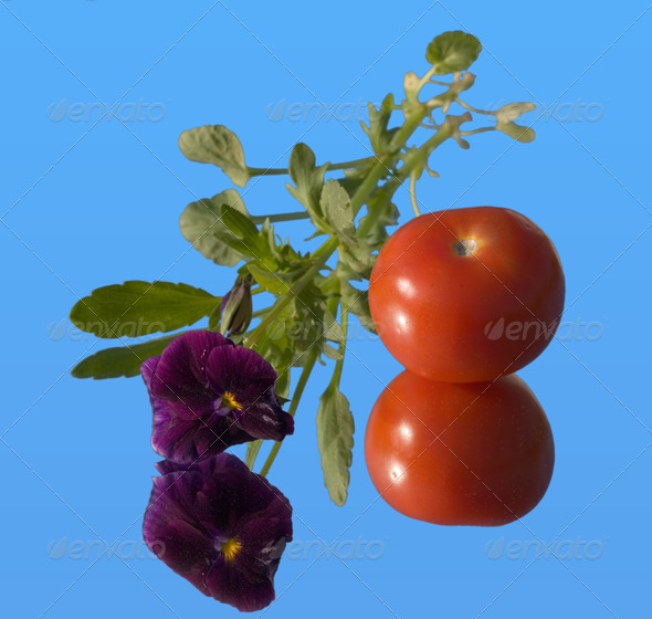 PhotoDune tomato and viola on a mirror 4082544