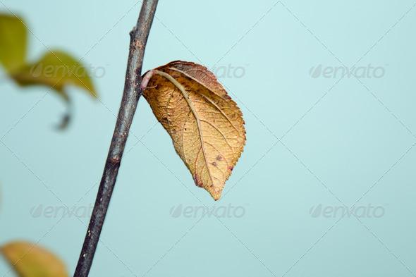 PhotoDune Yellow leaves Autumn 4082672