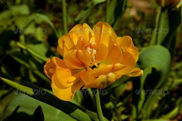 PhotoDune Yellow flower 4082724