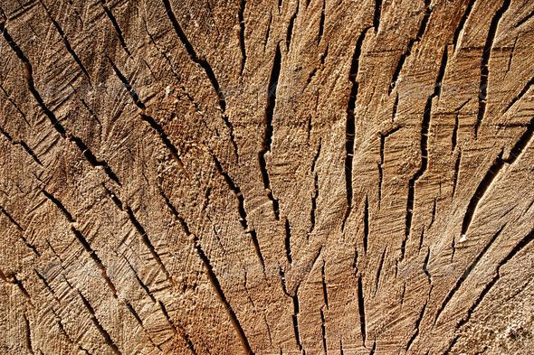 PhotoDune Grunge texture of stump 4088351