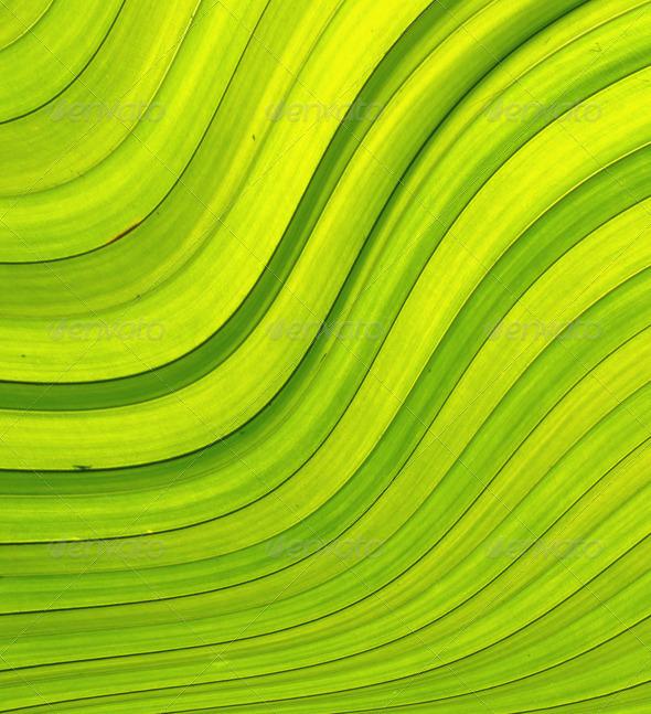 PhotoDune green leave 4112126