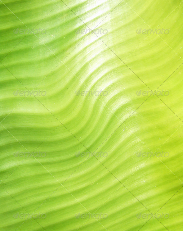 PhotoDune Green leave 4112123