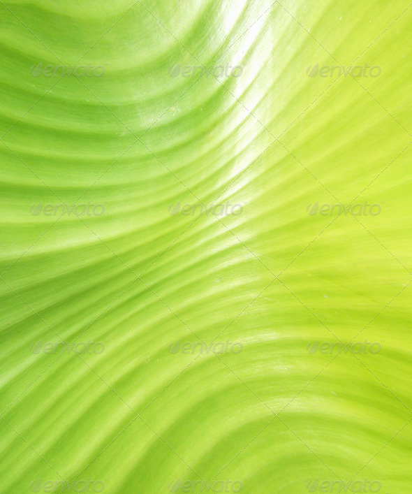 Green leave - Stock Photo - Images