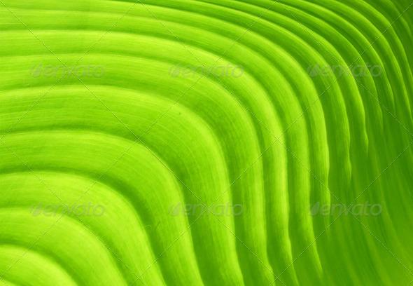 PhotoDune Green leaf 4112119