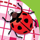 Checkered Heart, Ladybird and Daisies - GraphicRiver Item for Sale