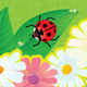 Ladybirds and Daisies - Summer Card  - GraphicRiver Item for Sale