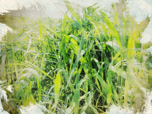 PhotoDune Vintage nature background 4096458