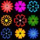 Colourful Floristic Shapes