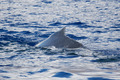 Humpback whale back - PhotoDune Item for Sale