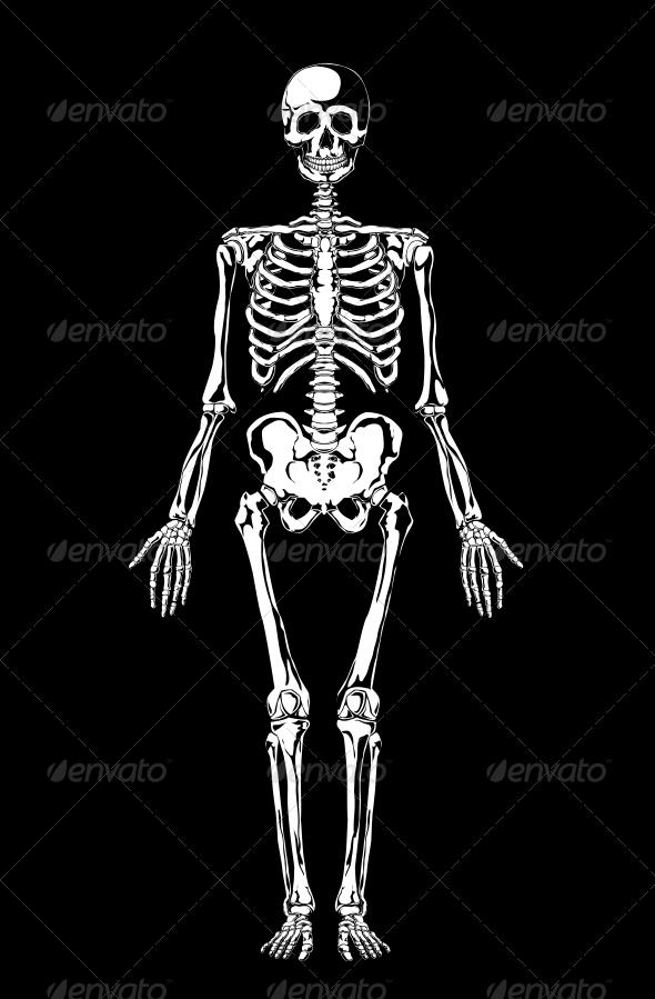 GraphicRiver Skeleton 4107964