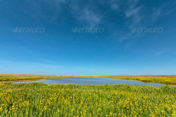 PhotoDune Lake with yellow flowers on the Dutch island Texel 4111535