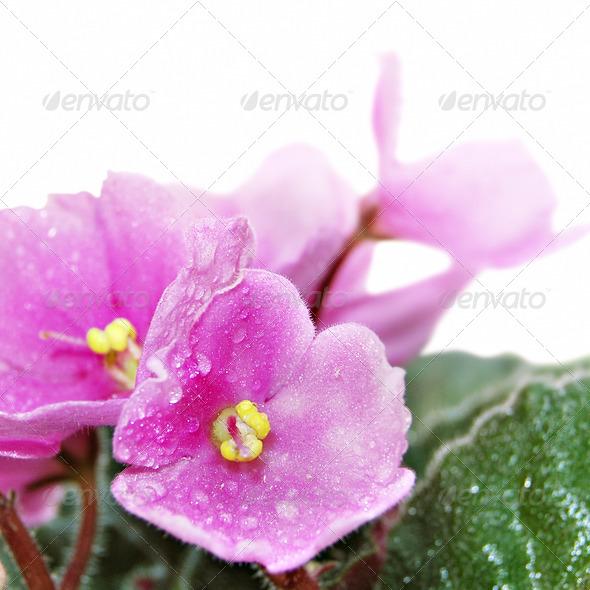 PhotoDune Violet 4112136