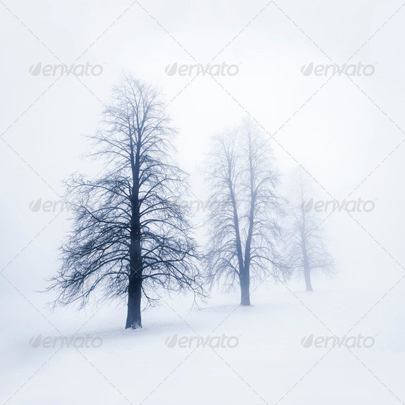 Winter trees in fog - Stock Photo - Images