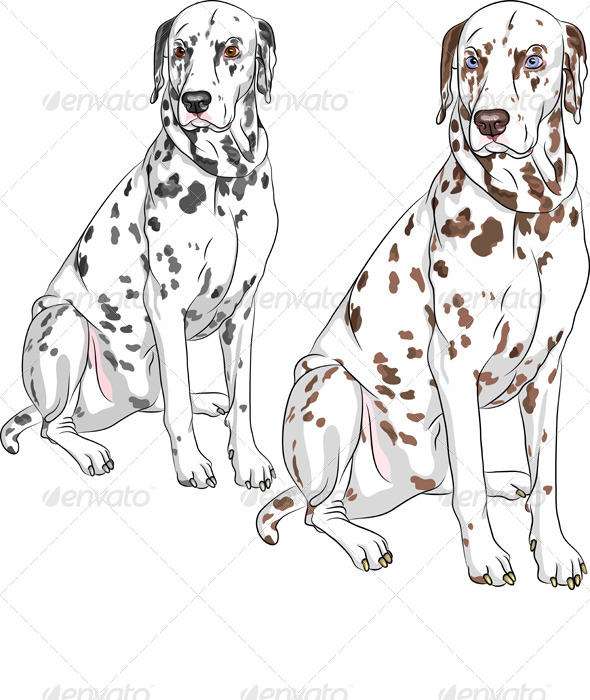 Vector Set Dog Dalmatian Breed