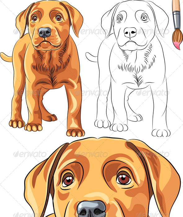 Vector Coloring Book of Labrador Puppy - Animals Characters